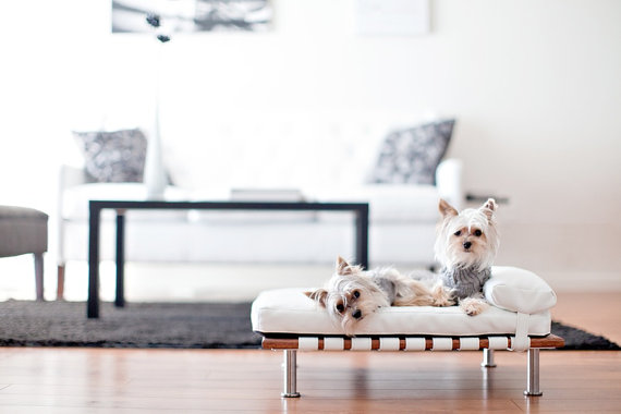 ModPet Modern Pet Bed Daybed